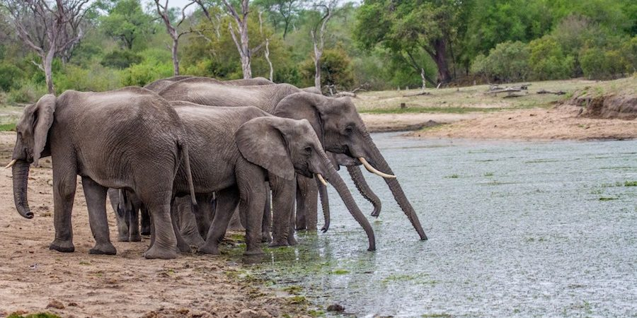 SOUTH AFRICA- An elephant family quenches their thirst. (Photo credit: Brent Leo-Smith)